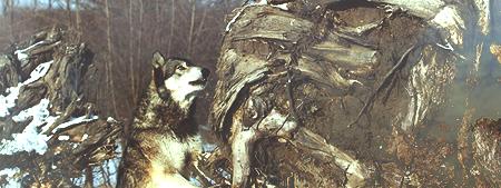 http://volkles.ucoz.ru/dla_foruma/reklama2.png